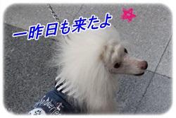 IMG_1195.jpg