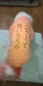 いんてぃんち-DCF00032.JPG