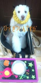 いんてぃんち-DCF00083.jpg