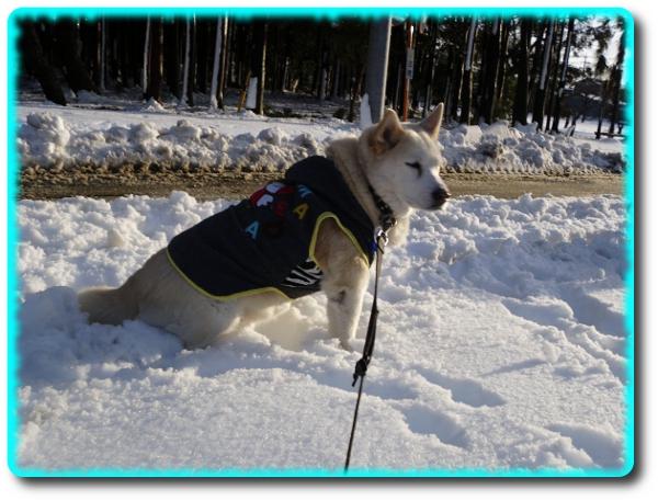 雪がいっぱい!!お散歩1