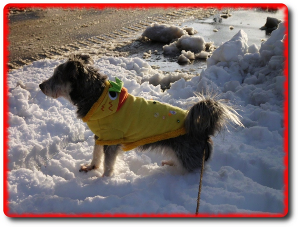 雪がいっぱい!!お散歩2