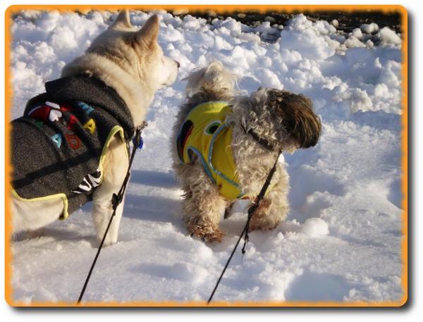 雪がいっぱい!!お散歩4
