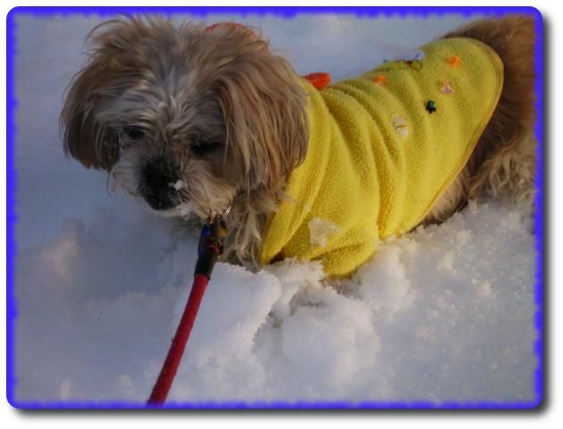 雪がいっぱい!!お散歩5