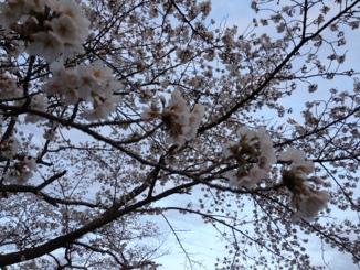 fc2blog_20130410010952221.jpg