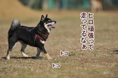 ヒロがんばれ~