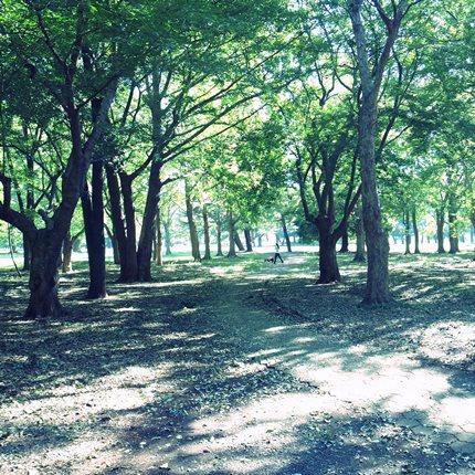 野川公園♪