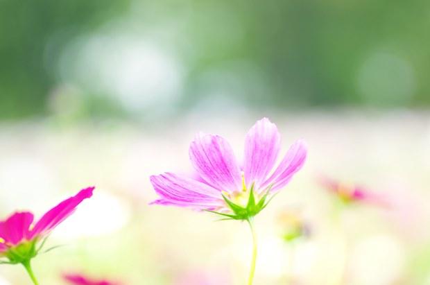 そっぽ向いている花も好き~♪