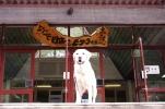 土合駅と犬