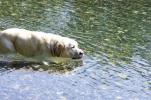 犬川に浸け込むの図