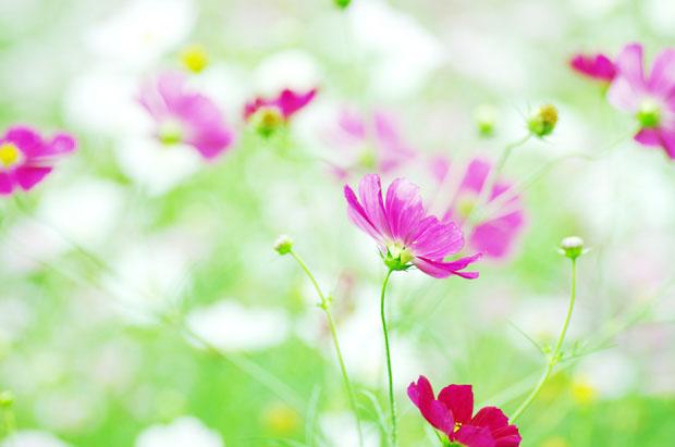 よれよれっとした花が好きー♪