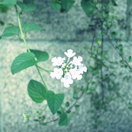 好みの花~♪