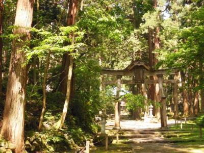 平泉寺白山神社の杜