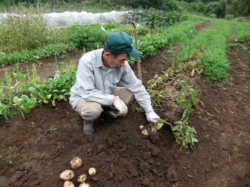 2013.6.24 ジャガイモ収穫(伊藤農園) 002