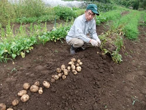 2013.6.24 ジャガイモ収穫(伊藤農園) 003