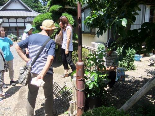 2013.7.8 パッションフルーツ栽培講習(やまびこ) 047 (6)