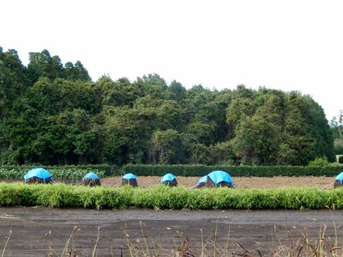 2013.10.18 農園カフェ(川原井) 003 (1)