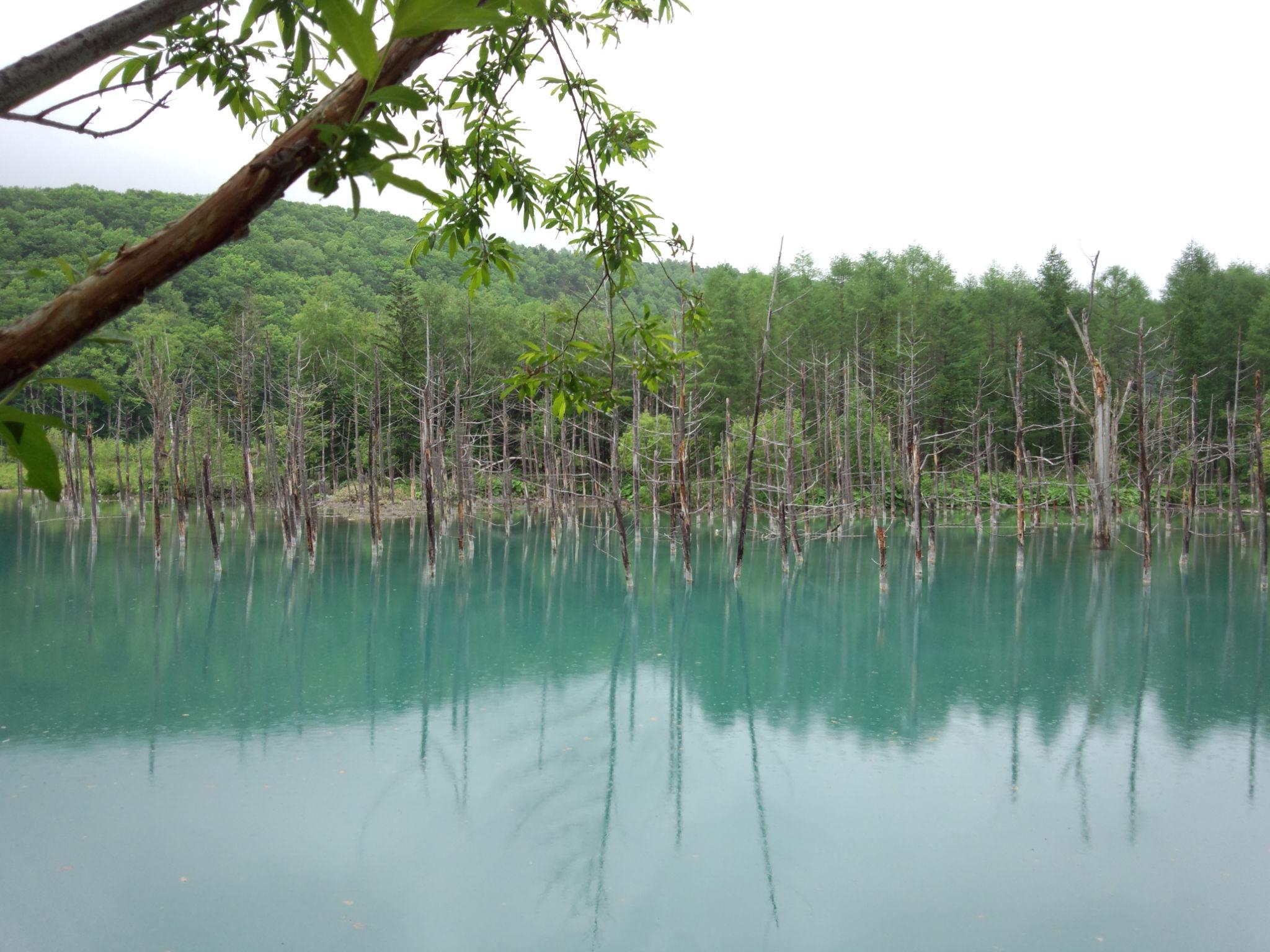 青い池H2506