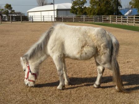 野間馬ハイランド 野間馬 1