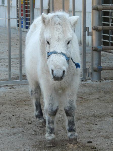 野間馬ハイランド 野間馬 5