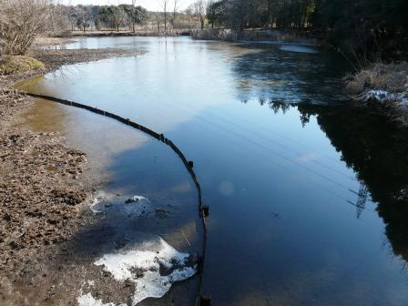 筑波実験植物園 池
