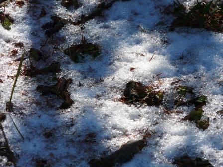 筑波実験植物園 名残の雪 1