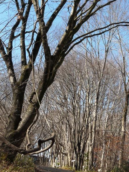 筑波実験植物園 冬枯れの木々 2