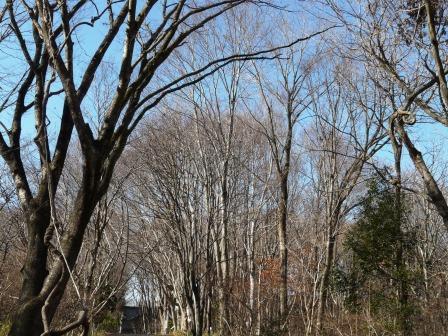 筑波実験植物園 冬枯れの木々 1