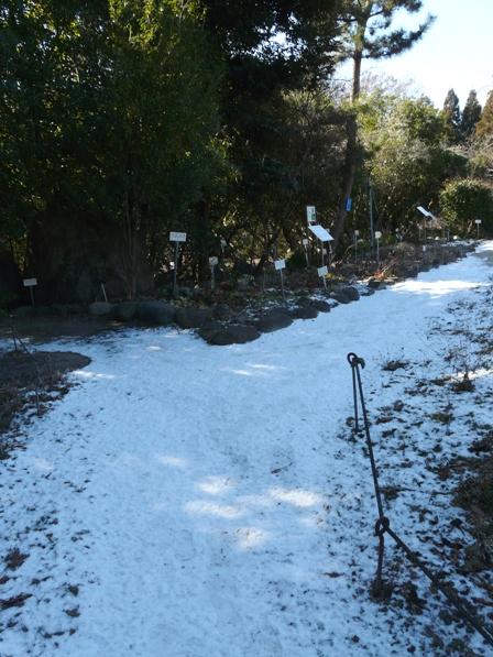 筑波実験植物園 名残の雪 2