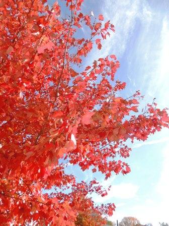 青空と、紅葉と (2)