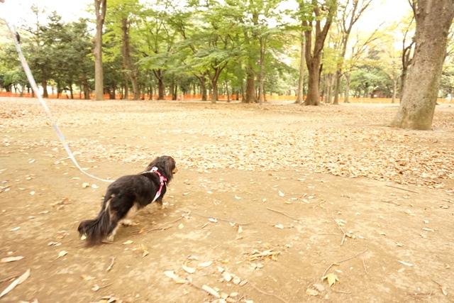 代々木公園 (4)