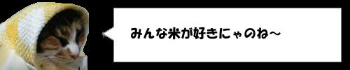 「米の生産量の多い国」ランキングで日本は何位?