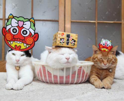 節分気分を満喫する猫たち
