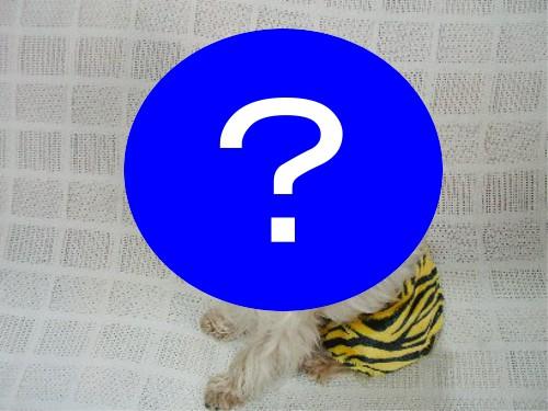 「節分 犬」で画像検索した結果・・・
