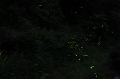 鳥川2013 (3)