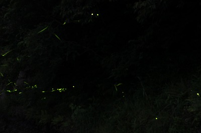 鳥川2013 (8)