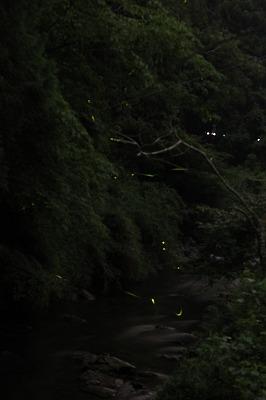 鳥川2013 (17)
