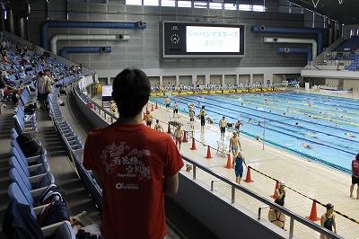 水泳Japancup 2013 (3)