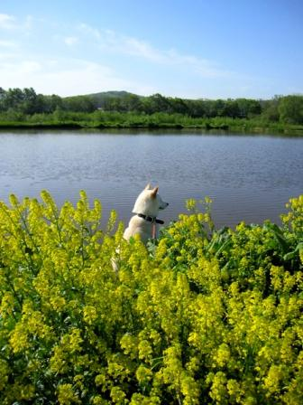 一見、湖とか沼とか風