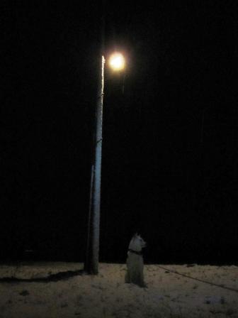 夜中は月が出ていた