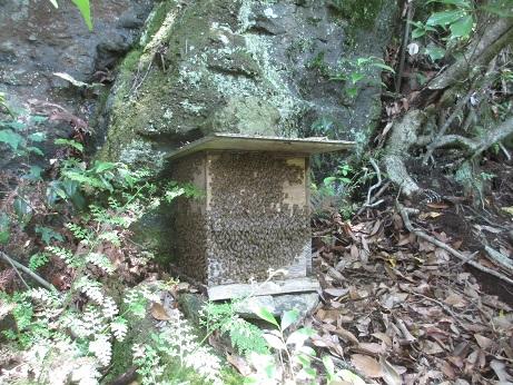 右群の巣箱の蜂 13,6,16
