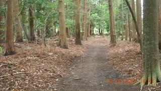東昌寺の林
