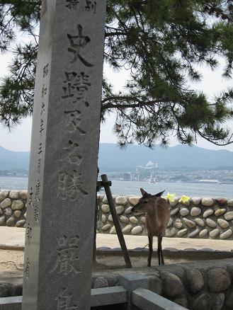 2013広島旅行:宮島 鹿②