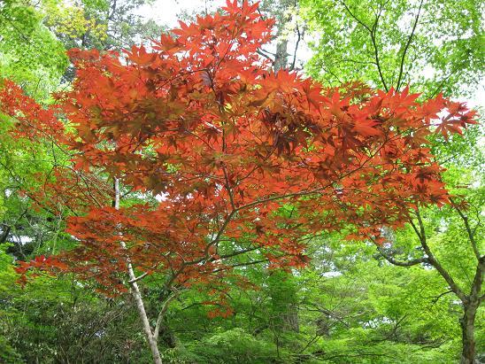 2013広島旅行:宮島 紅葉谷公園③