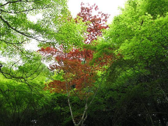 2013広島旅行:宮島 紅葉谷公園②
