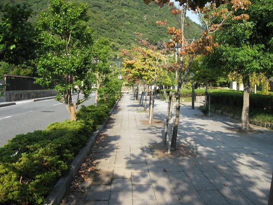 鳥取旅行:鳥取城跡 街路樹