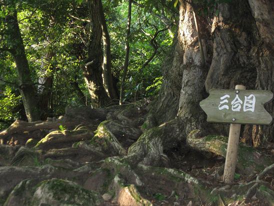 鳥取旅行:鳥取城跡 3合目