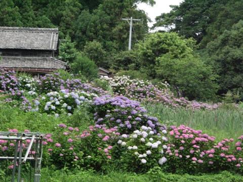 神山神社 018