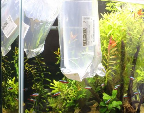 2014 11 10 熱帯魚 03