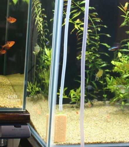 2014 11 10 熱帯魚 04