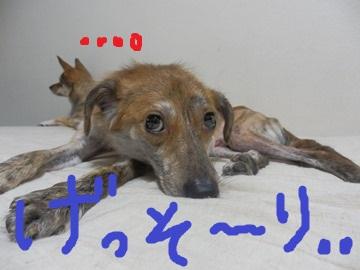 帰宅の男 (4)
